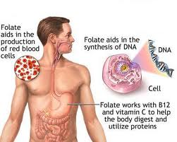 Anemia Defisiensi Vitamin B12 atau Folat