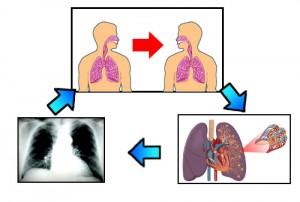 Upaya Penyembuhan Penyakit TBC