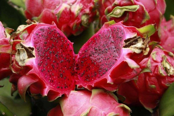 Manfaat buah naga merah bagi kesehatan