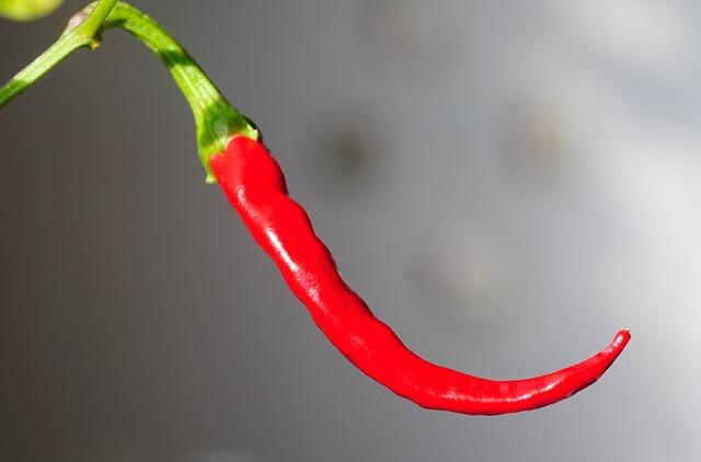 Manfaat cabai merah untuk penyembuhan penyakit