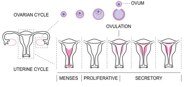 Misteri Dibalik Menstruasi