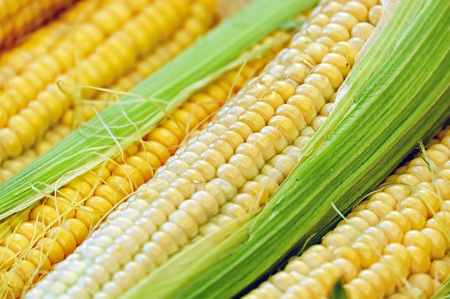 Jagung, Sumber Karbohidrat yang Kaya Protein