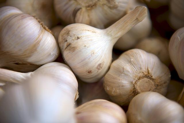 manfaat mengunyah bawang putih