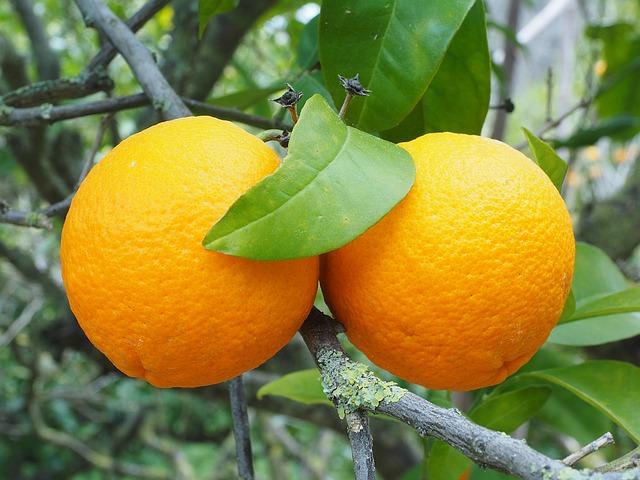 buah yang tidak boleh dikonsumsi setelah minum obat