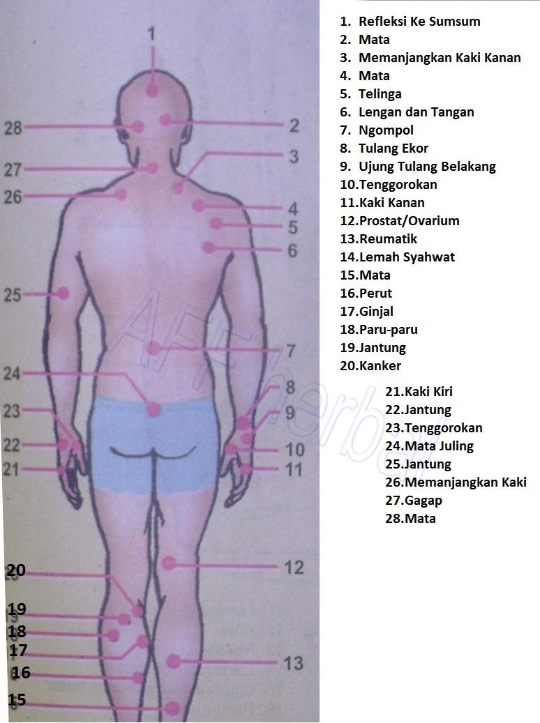 Titik-titik refleksi pada tubuh manusia
