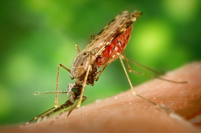 Obat penyakit malaria